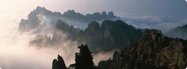Серебряные Брови (Инь Цзюнь Мэй) - элитный китайский чай по выгодной цене в интернет магазине Чайная Философия