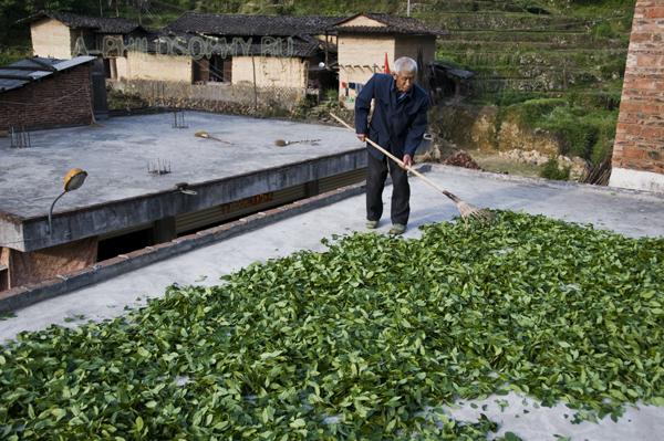 Сушка чайного листа Тегуанинь