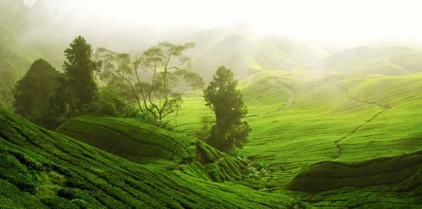 Основные понятия о китайском чае
