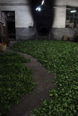 Прожаривание чайных листьев